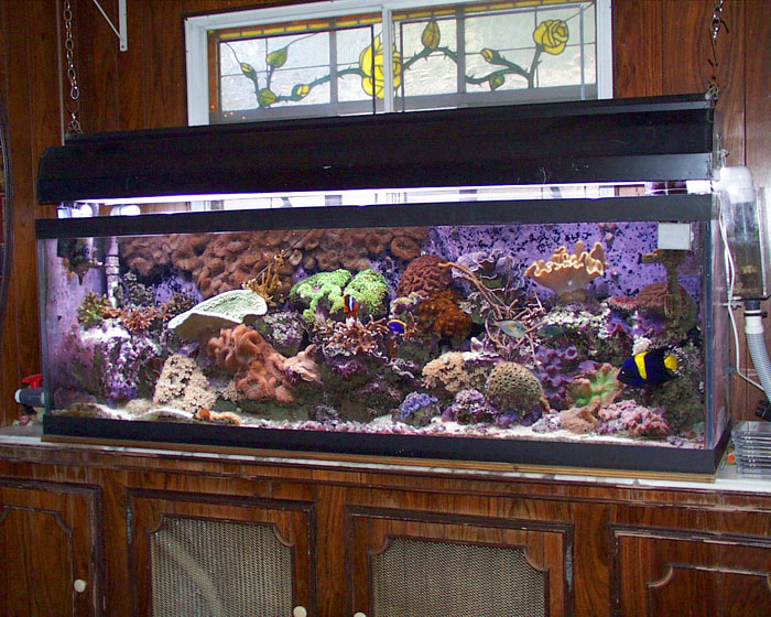 Terry's old 135g reef tank.