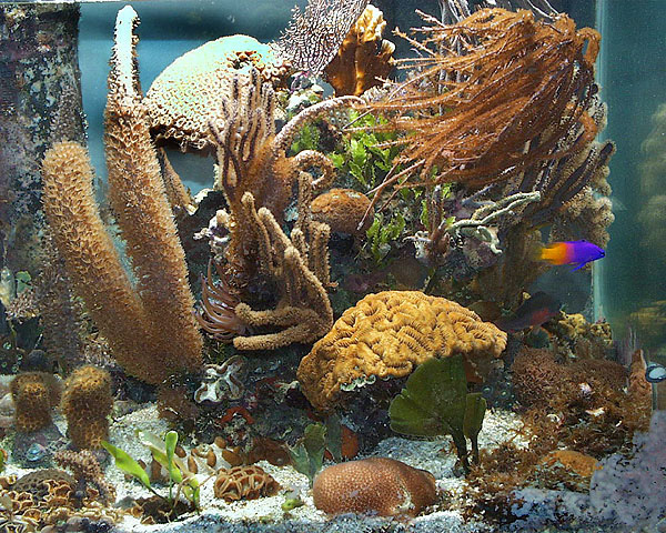 This Caribbean coral reef was run with a plenum style of filtration.