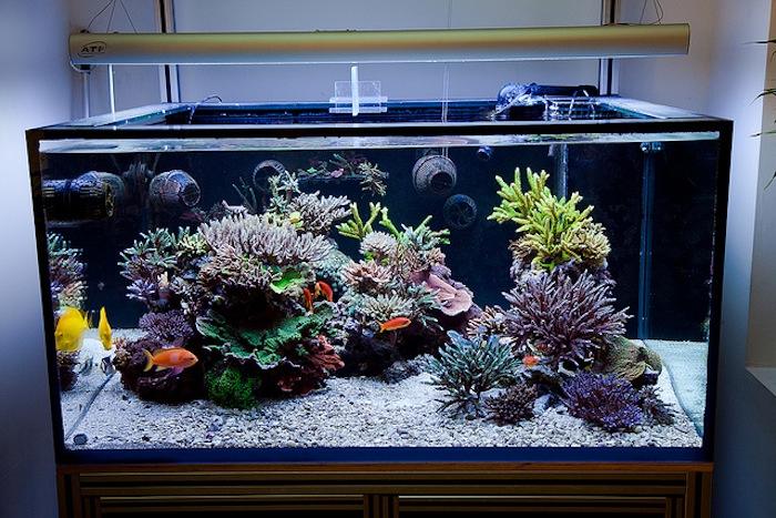 Reefs.com - Saltwater Aquarium Blog - Marine Aquarium Blog ...