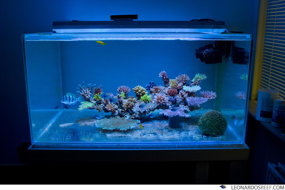 Reef Aquascape Styles