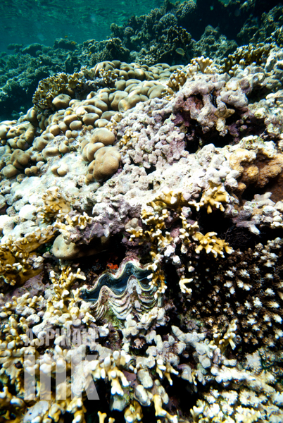 another squamosal well and truly part of the reef